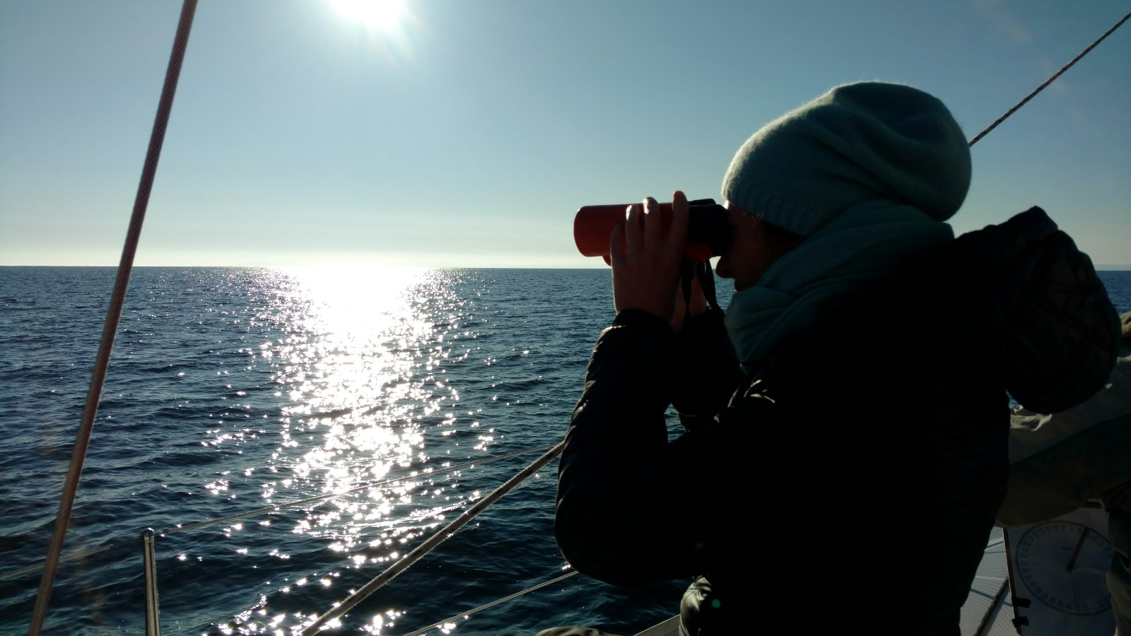 my volunteering for the dolphin monitoring expedition